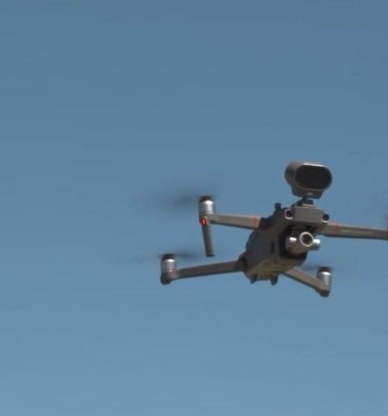 Bellende Drohnen in Neuseeland -